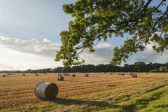 Красивое изображение ландшафта сельской местности связок сена в fie лета Стоковые Изображения RF