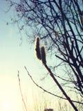 Красивое изображение воображения весны природы и рождения новой жизни от почек в деревьях Стоковая Фотография