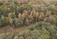 Красивое изображение ландшафта трутня взгляда глаза птицы во время падения осени живого полесья леса стоковое фото