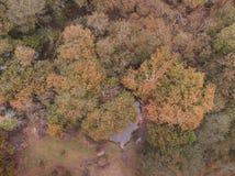 Красивое изображение ландшафта трутня взгляда глаза птицы во время падения осени живого полесья леса стоковые фото