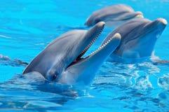 3 красивое и смешные дельфины стоковые фото