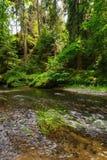 Красивое и чистое река Kamenice Стоковая Фотография