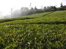 Красивое кафе на открытом воздухе в южной Индии ooty Стоковые Фото