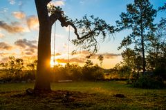 Красивое качание дерева на восходе солнца в естественном саде внешнем с пасмурными голубым небом и солнцем Стоковые Изображения