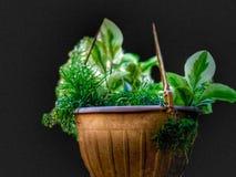 Красивое коричневое ведро цветка цвета Посмотрите славный стоковая фотография