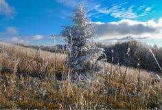 Красивое, который замерли дерево в осени Стоковые Изображения