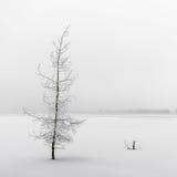 Красивое, который замерли дерево Стоковое Изображение RF