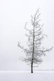 Красивое, который замерли дерево Стоковые Фото