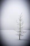 Красивое, который замерли дерево Стоковые Фотографии RF
