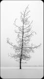 Красивое, который замерли дерево Стоковая Фотография RF