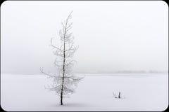 Красивое, который замерли дерево Стоковое фото RF