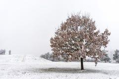 Красивое, который замерли дерево Стоковая Фотография