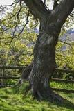 Красивое красочное изображение дерева в поле в сельской местности в Spri Стоковое Фото