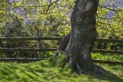 Красивое красочное изображение дерева в поле в сельской местности в Spri Стоковое Изображение RF