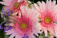 Красивое красочное собрание торжества лета весны цветков Стоковые Изображения RF