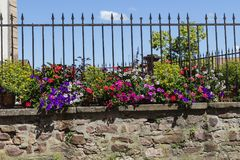 красивое красочное summerflora за старой стеной Стоковые Фото