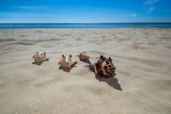 4 красивое, красочные, эксцентричные формы seashells лежа на песке Стоковое Изображение RF