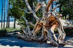 Красивое мертвое дерево постучанное сверх Стоковые Изображения RF