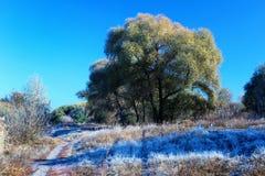 Красивое морозное утро с гололедью на траве в тенях дерева Стоковая Фотография
