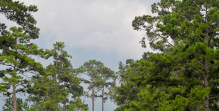 Красивое небо с деревьями Стоковые Изображения RF
