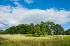 Красивое неподвижное озеро с деревьями на горизонте и белых тучных облаках в небе Мирный летний день на коттедже Большой зеленый  стоковые фото