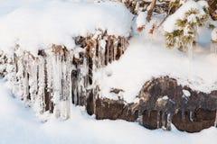 Красивое образование льда сосульки на малом дереве Стоковая Фотография RF