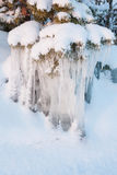 Красивое образование льда сосульки на малом дереве Стоковое фото RF