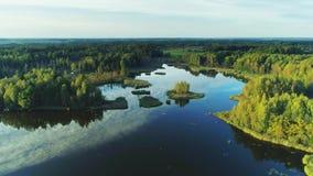 Красивое озеро во дне зеленого лета леса солнечном видеоматериал