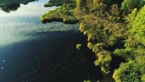 Красивое озеро во дне зеленого лета леса солнечном сток-видео