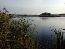 Красивое озеро в природном парке Vacaresti, городе Бухареста, Румынии Стоковое Фото