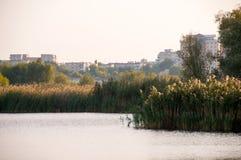 Красивое озеро в природном парке Vacaresti, городе Бухареста, Румынии Стоковая Фотография