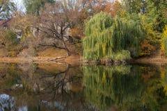 Красивое озеро, отражение дерева в озере Стоковое Фото