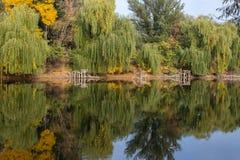 Красивое озеро, отражение дерева в озере Стоковые Фото
