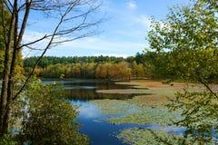 Красивое озеро с плавая стручками лилии в лесе осени стоковое изображение