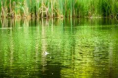 Красивое отражение озера лета - текстурированной предпосылки Стоковое Изображение RF