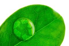 Красивое падение воды на всходе лист и рециркулирует логотип Стоковое фото RF