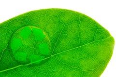 Красивое падение воды на всходе лист и рециркулирует логотип Стоковая Фотография