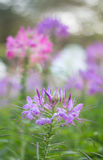 Красивое пастельное флористическое Стоковые Изображения