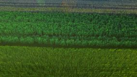 Красивое поле зерна ландшафта в сельскохозяйственном угодье Волшебный заход солнца над пшеничным полем видеоматериал