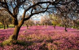 Красивое поле с фиолетовым vail цветков в земле Стоковые Изображения RF