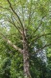 Красивое полное дерево в цветени стоковая фотография rf
