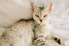 Красивое положение кота стоковые изображения