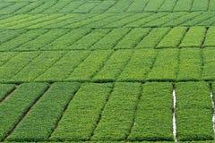 Красивое поле арахиса - предпосылка Стоковая Фотография RF