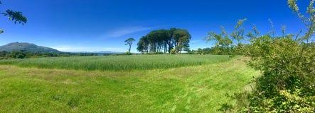 Красивое поле в Керри Ирландии графства Killarney Стоковые Фото