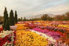 Красивое поле красочных цветков в парке Стоковые Фотографии RF