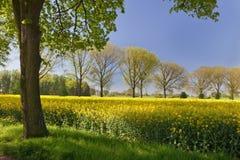 Красивое поле рапса Стоковые Изображения