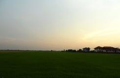 Красивое поле риса с восходом солнца, стоковая фотография