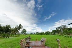Красивое поле риса Стоковые Фотографии RF
