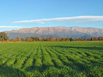 Красивое поле сельского хозяйства Стоковая Фотография