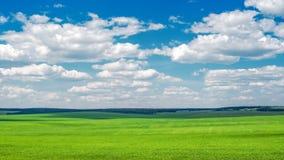 Красивое поле фермы Стоковые Фотографии RF